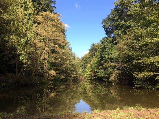 Soudley Ponds