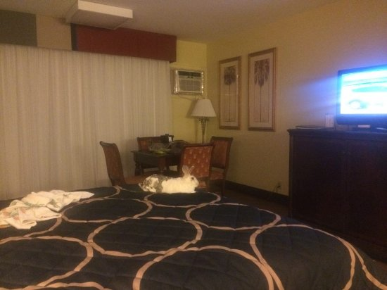 "Port Hueneme, Kalifornien: ""Narvik"" watching TV on the comfortable bed..."