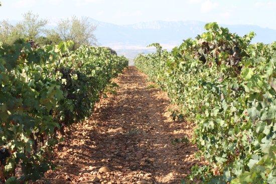 Riojatrek: View from the vineyards