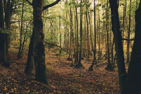 Löwenberger Land Foto