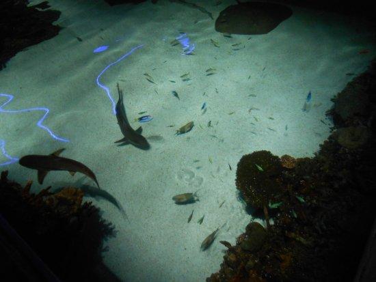 Sleep Inn & Suites Downtown Inner Harbor: at the aquarium
