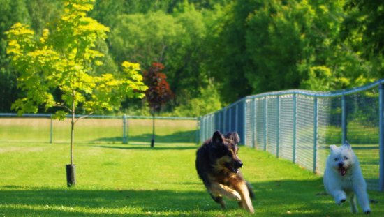 Meaford, Canada: Let your four-legged friend run free at the Leash-Free Dog Park!