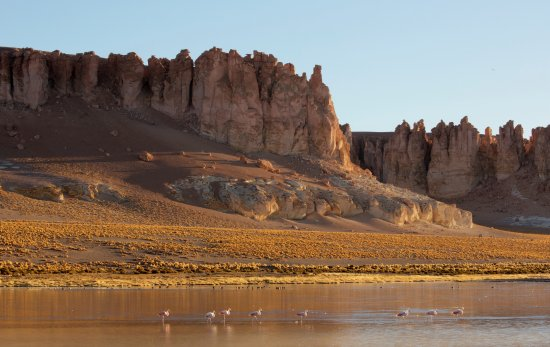 Tierra Atacama Hotel & Spa: Flamingos and scenery