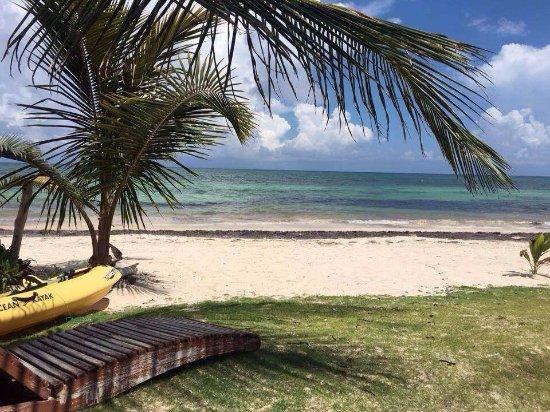 Mayan Beach Garden-bild