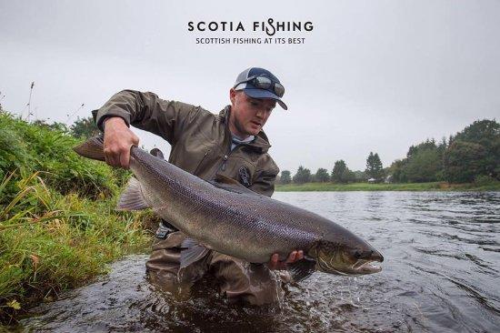 Larbert, UK: 19.5lb Atlantic Salmon