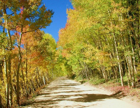 Gold Point Resort : Aspens on Boreas Pass above Gold Point