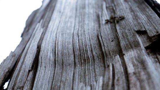 Kadinggou Scenic Spot: 由於實在沒什麼可拍照,就拍了這棵枯去了的樹,木紋很好看