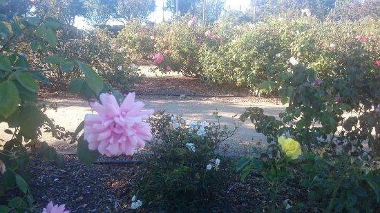 Heritage Rose Garden San Jose Ca Top Tips Before You Go Tripadvisor