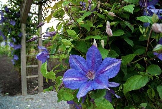 Pretty flowers in highline seatac botanical garden picture of highline seatac botanical gardens beautiful flowers highline seatac botanical garden mightylinksfo