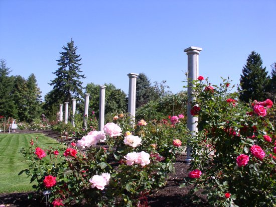 Columns Line The Rose Garden Picture Of Highline Seatac