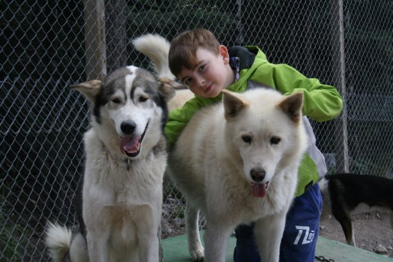 Snowy Owl Sled Dog Tours: Beauties