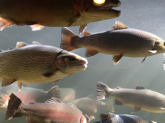 Branson, MO: Picture from inside tank.
