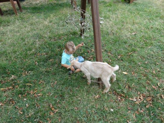 Thronos, Grèce : lieve dieren bij de speeltuin