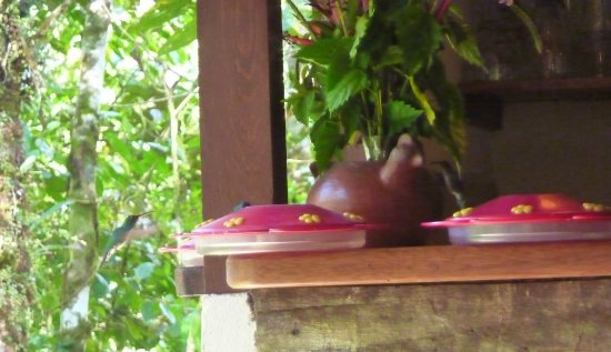 Zamora, Ecuador: Can you see both hummingbirds?