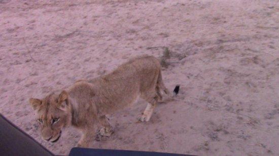 Zdjęcie Ulusaba Private Game Reserve