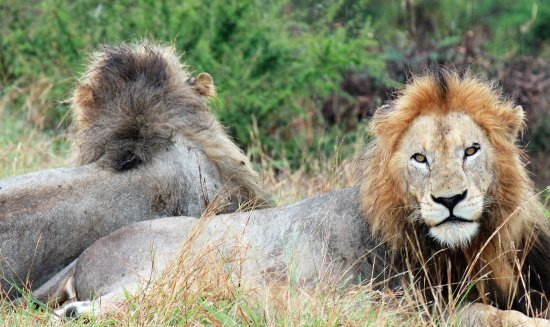 Sabie, Sudáfrica: Lion Brothers Mirrored