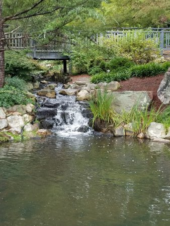 Lewis Ginter Botanical Garden: Ponds and streams wind through the woods and provide a pleasant backdrop to a meal at the Tea Ro