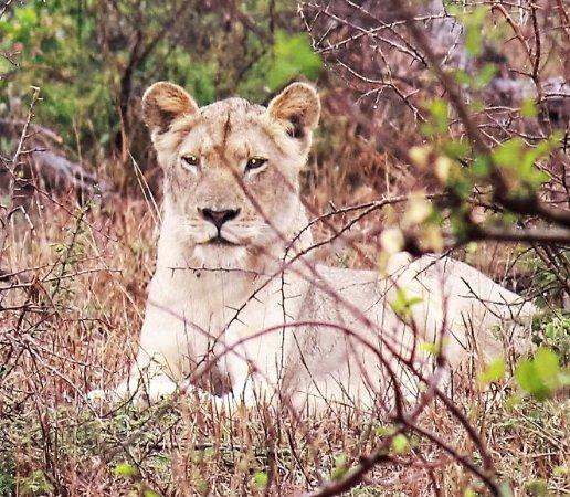 Sabie, Sydafrika: Sheba