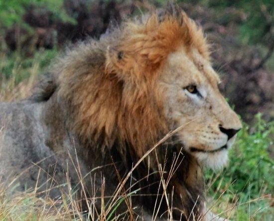 Sabie, Sydafrika: Lion King
