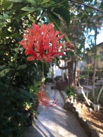 Casa La Iguana Photo