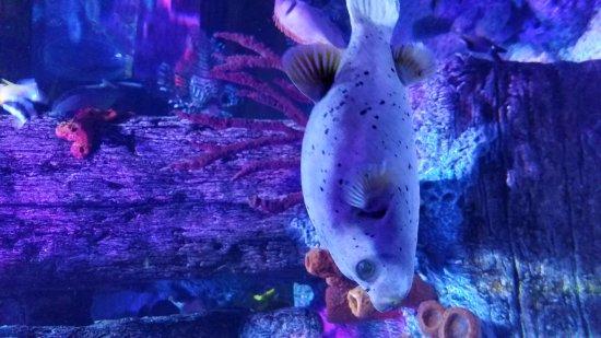 Picture Of Sea Life Michigan Aquarium Auburn