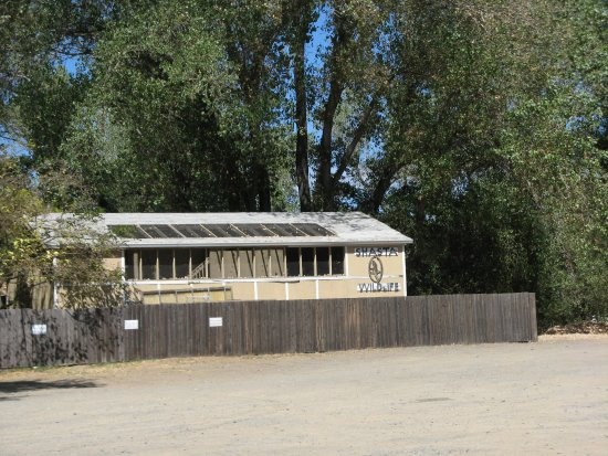 Anderson, CA: Shasta Wildlife Rescue & Rehabilitation