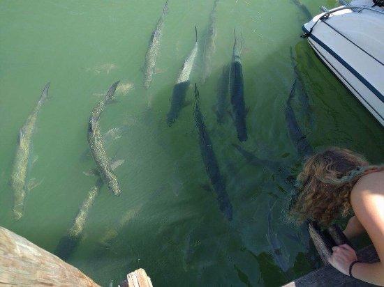 Lake Monroe, Flórida: photo9.jpg
