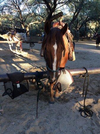 Houston's Horseback Riding : photo0.jpg