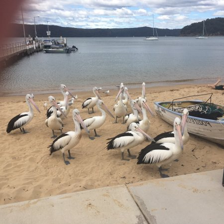 Patonga, Avustralya: photo0.jpg