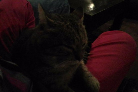 Pance, โคลอมเบีย: Jerónimo, el gato del lugar