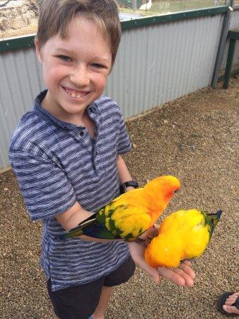 Maleny, Αυστραλία: bird loving