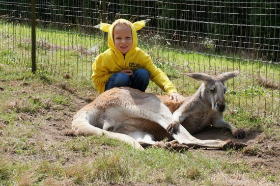 My grandson with his buddy Rocky at Fall City Wallaby Ranch