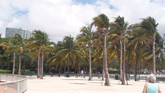 Bayfront Park: próximo do anfiteatro
