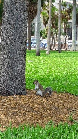 Bayfront Park: esquilo