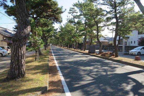 Row of Pine Trees in Kyutokaido: 東海道の松並木