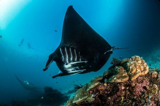 Bali Diving Info
