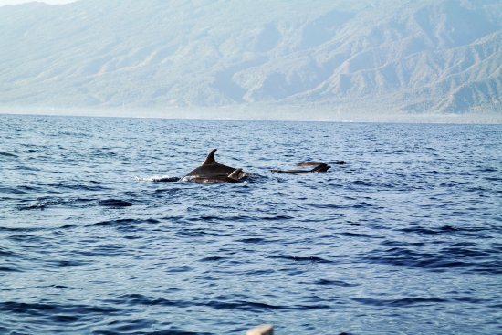 Cili Emas Oceanside Resort: Boat trip visiting the pilot whales !