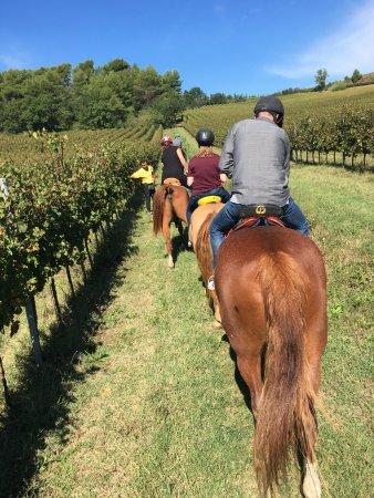 Cannara, Italia: Horseback riding through the vineyard