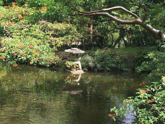 Morikami Museum & Japanese Gardens: Bassin