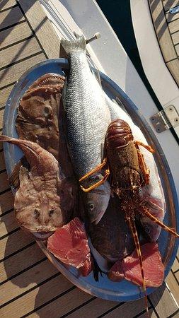 Milna, كرواتيا: Auswahl Fisch direkt am Steg