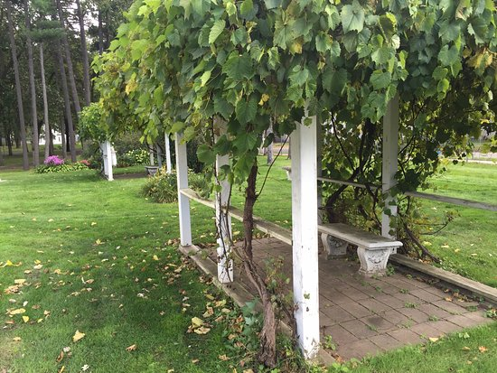 Little Falls, Μινεσότα: There are several grape arbors on the Linden Hill grounds