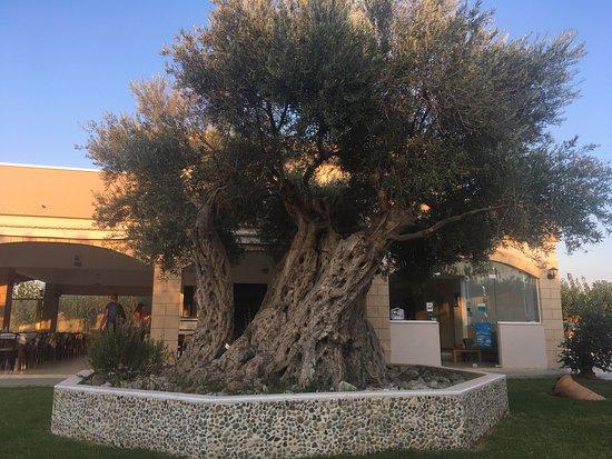 Mediterranean Studios Apartments: Hotel