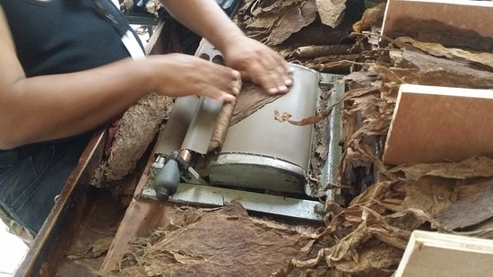 Cabarete, République dominicaine : cigar factory, step 1