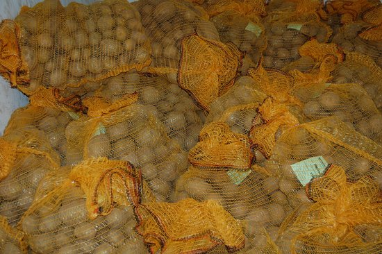 Mellenthin, Almanya: Unsere Kartoffelsorte Melina in unserem Kartoffellager