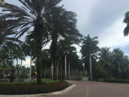 The Ritz-Carlton Golf Resort, Naples: View from valet parking pickup