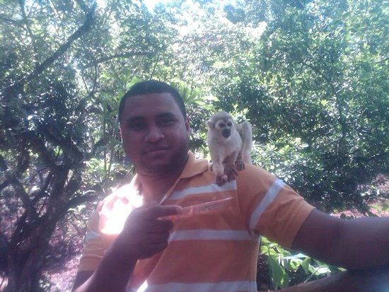 Cabarete, Dominikana: monkey jungle