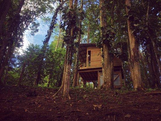 Nomad Tree Lodge
