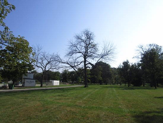 New Castle, IN: tree near ball field