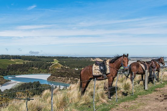 Springfield, Selandia Baru: Horses and views