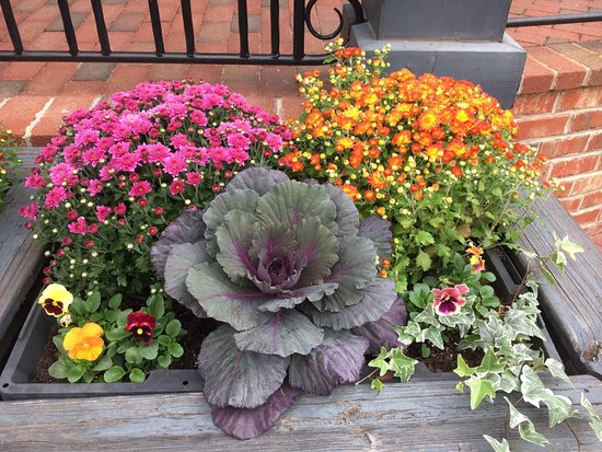 The Artisan Gourmet Market: Pretty planters out front